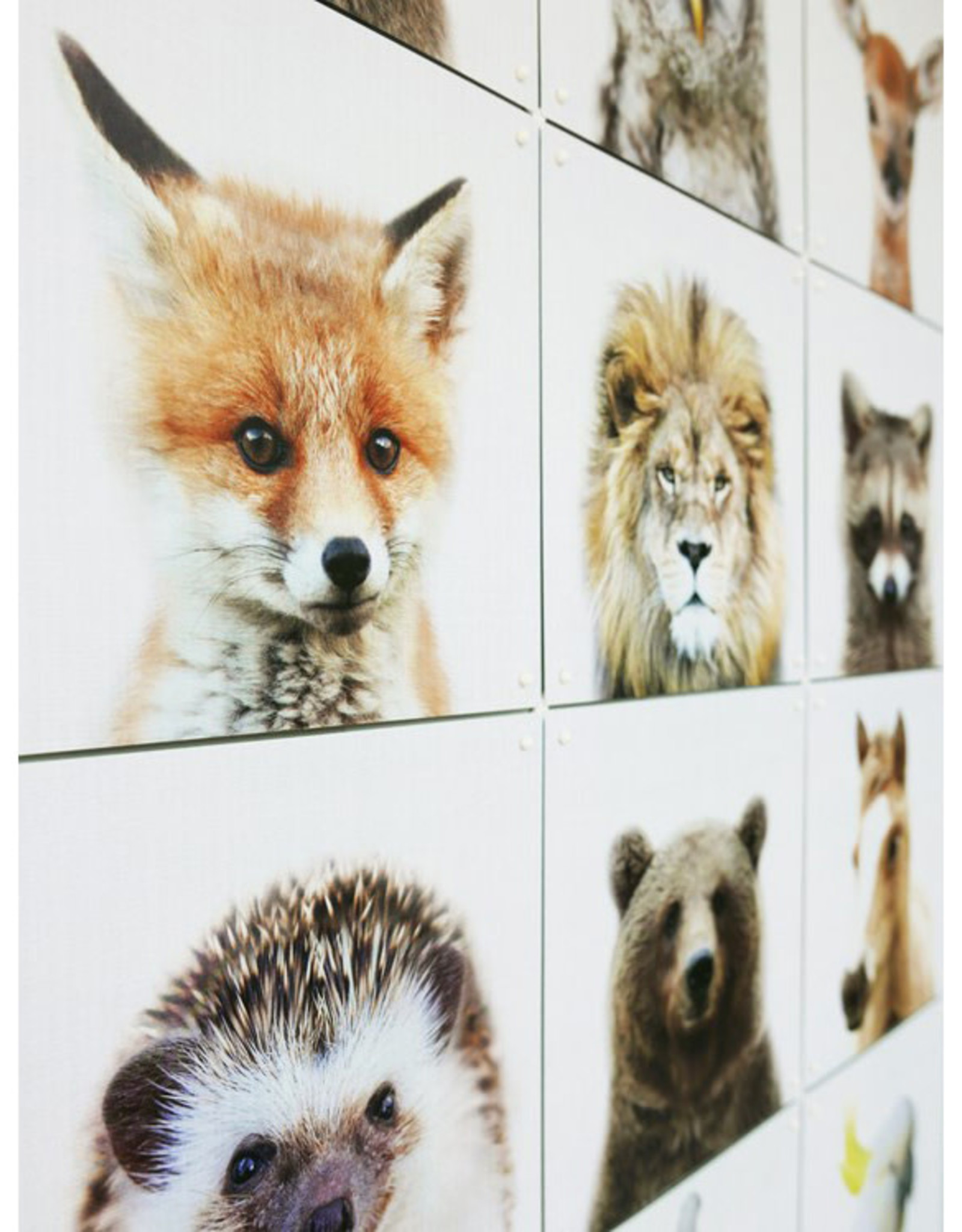 IXXI Animal Family (Double-Sided) - 12 Cards
