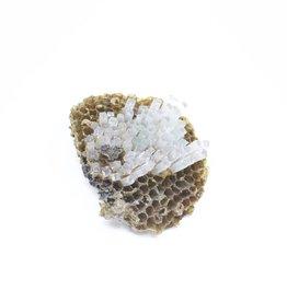 LBK Studio Paper Wasp Comb Sculpture - Small - 1