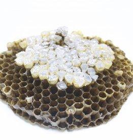 LBK Studio Paper Wasp Comb Sculpture - Large