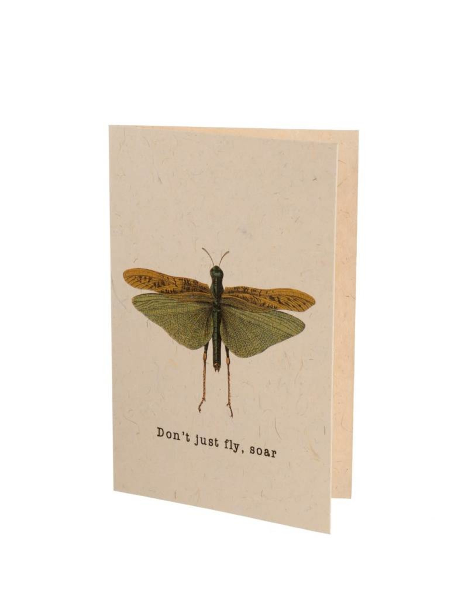 """Indaba """"Don't Just Fly, Soar""""Card"""
