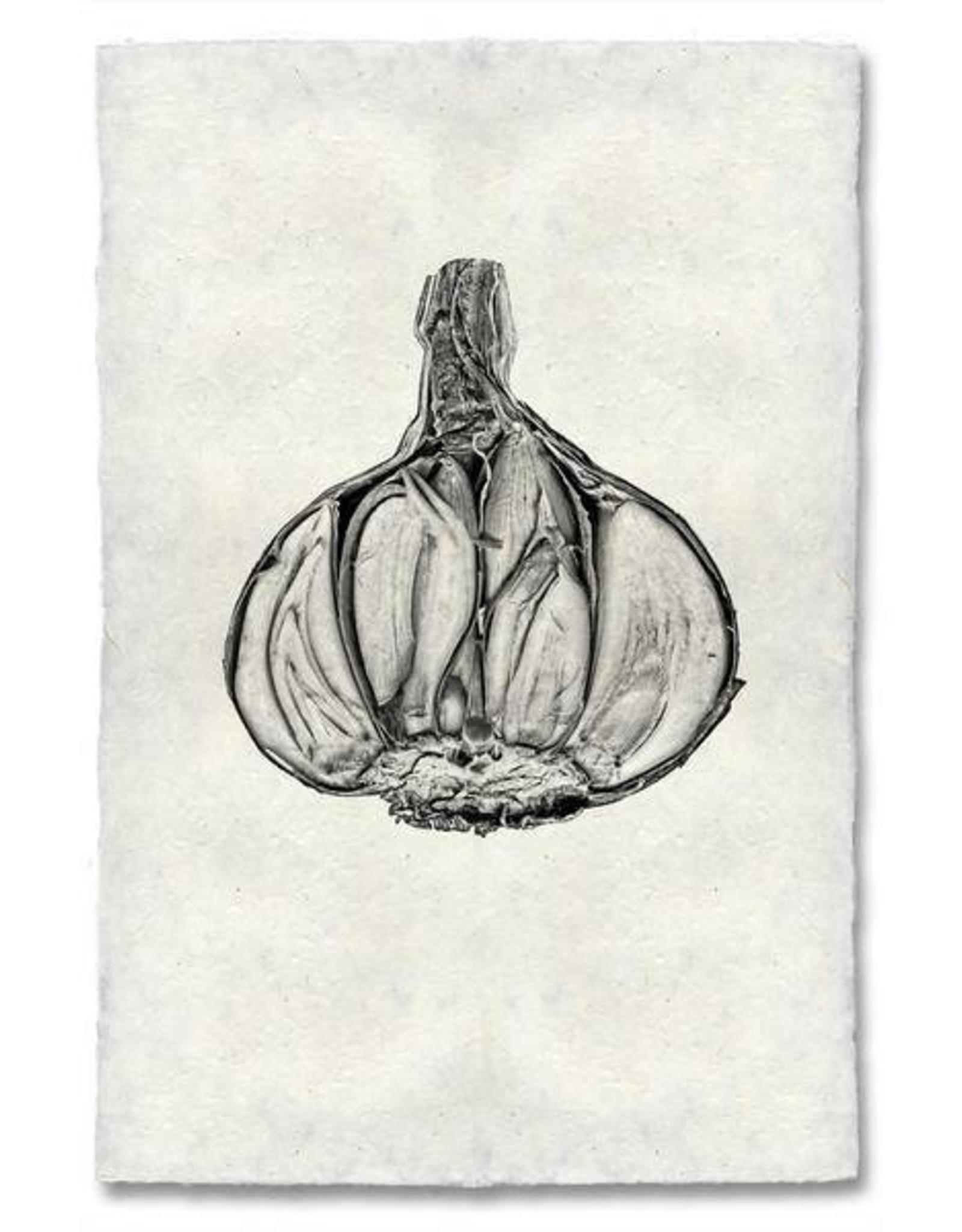 Barloga Studios Garlic Print