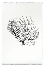 Barloga Studios Black Coral Fan #2 Print