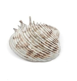 Yarnnakarn Channeled Clam Shell Dish