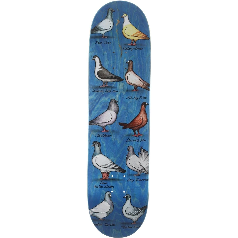 Anti Hero Daan Show Pigeons 8.38