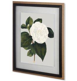Camellia Japonica II