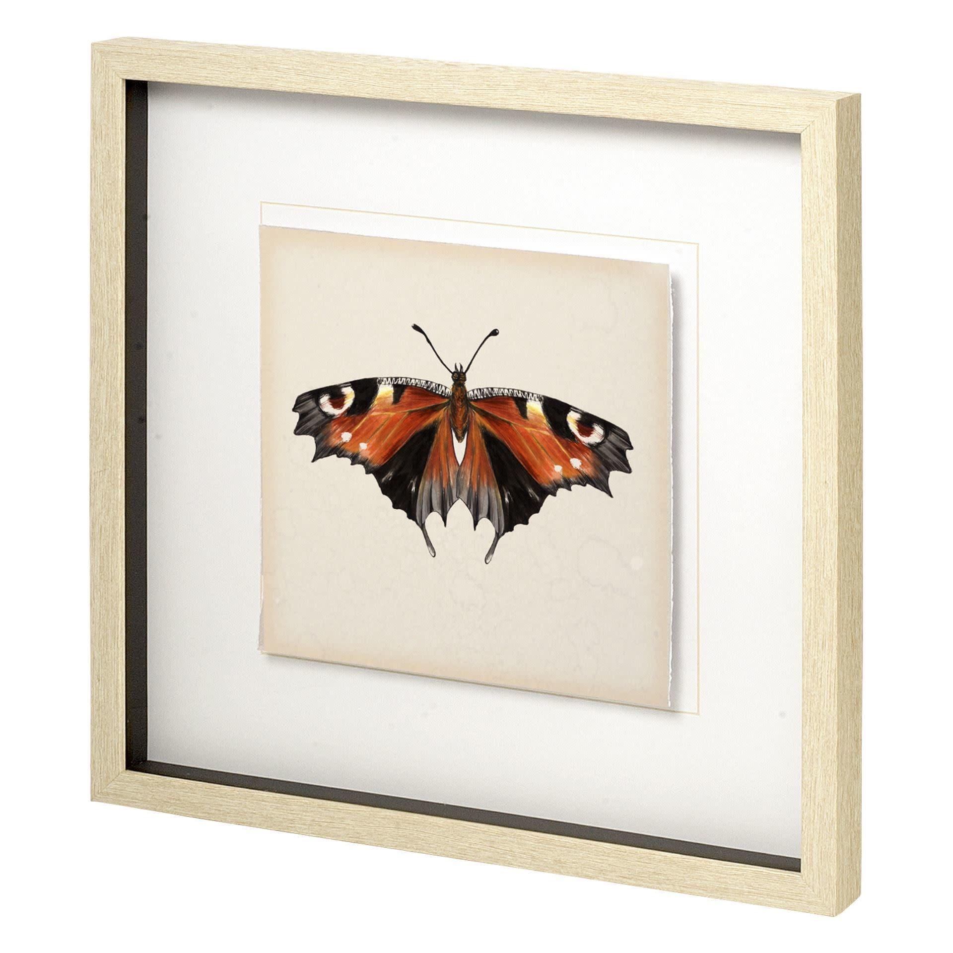 Butterfly Study V