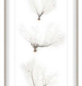 """Seafan Trio Shadowbox 23 x 45"""""""