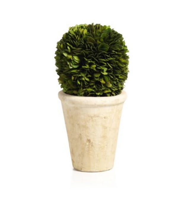 Boxwood Potted Ball Topiary Large