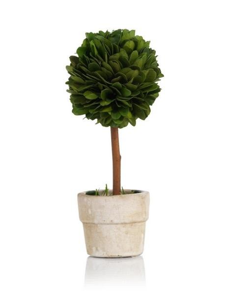 Preserved Boxwood Topiary in Round Pot - Mini