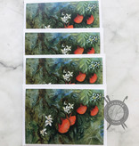 Oranges Watercolor Note Cards by Diane Medgaarden Nelson