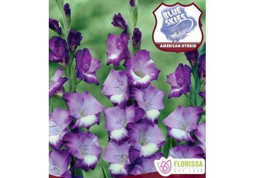 Gladiolus Blue Skies Bulbs