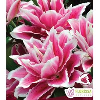 Lily Double Oriental Roselily Samantha