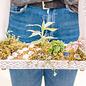 Take It or Leaf It - April 20 3:30p.m.
