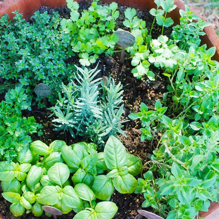 Herbs and Edibles Seminar - May 7 6:00p.m.