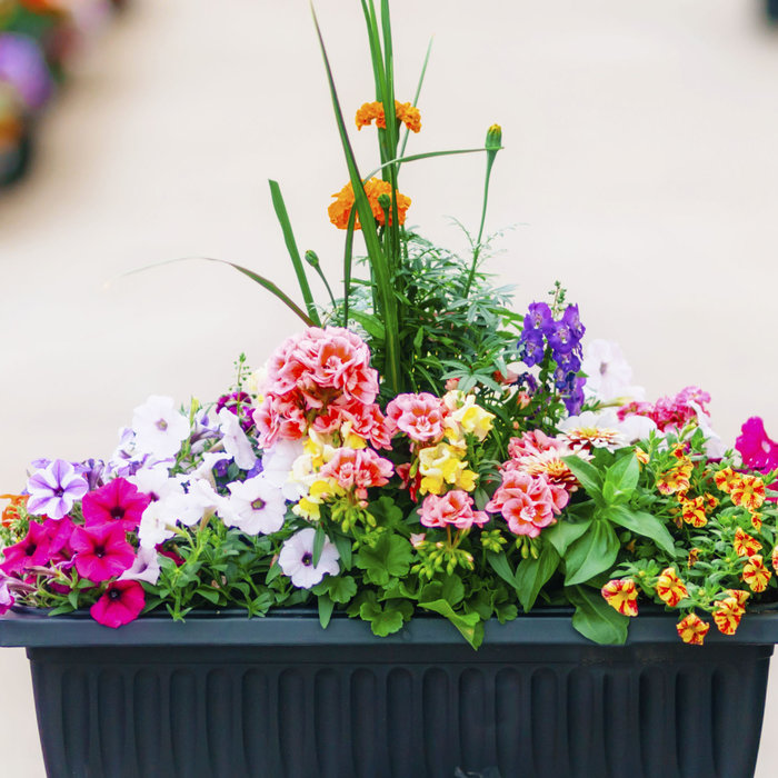 Container Gardening Seminar - May 14 6:00p.m.