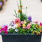 Container Gardening Seminar - May 14 6:00p.m.
