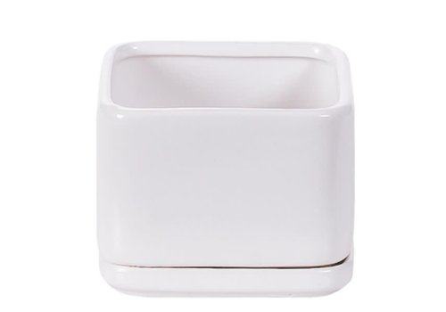 Hill's Imports Square Matte White Pot and Saucer 4.5""