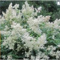 """Fleece Flower Tall White 5.5"""""""