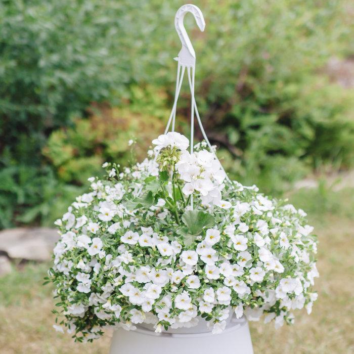 """Hanging Basket 14"""" Shade Wedding"""