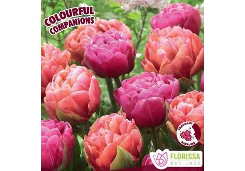Colourful Companions Tulip Joyful Hearts