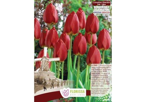 Tulip Canadian Liberator