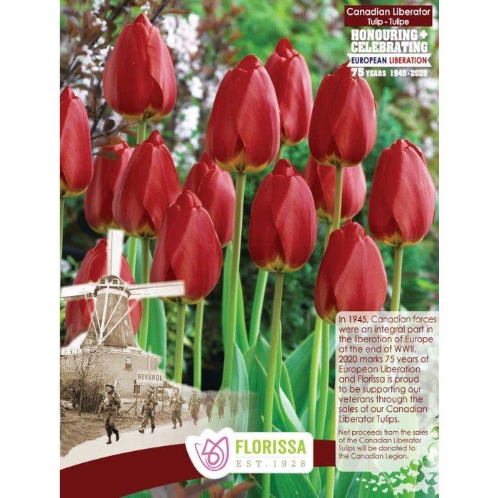 Tulip Canadian Liberator PRE-ORDER
