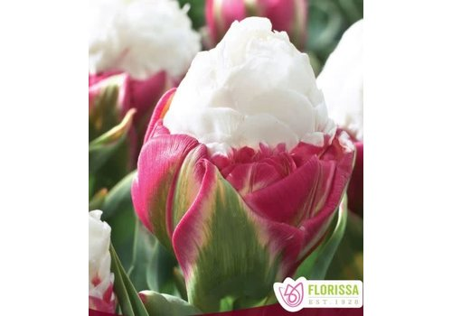 Tulip Double Peony Ice Cream