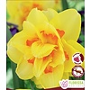 Double Narcissus Tahiti Package of 5
