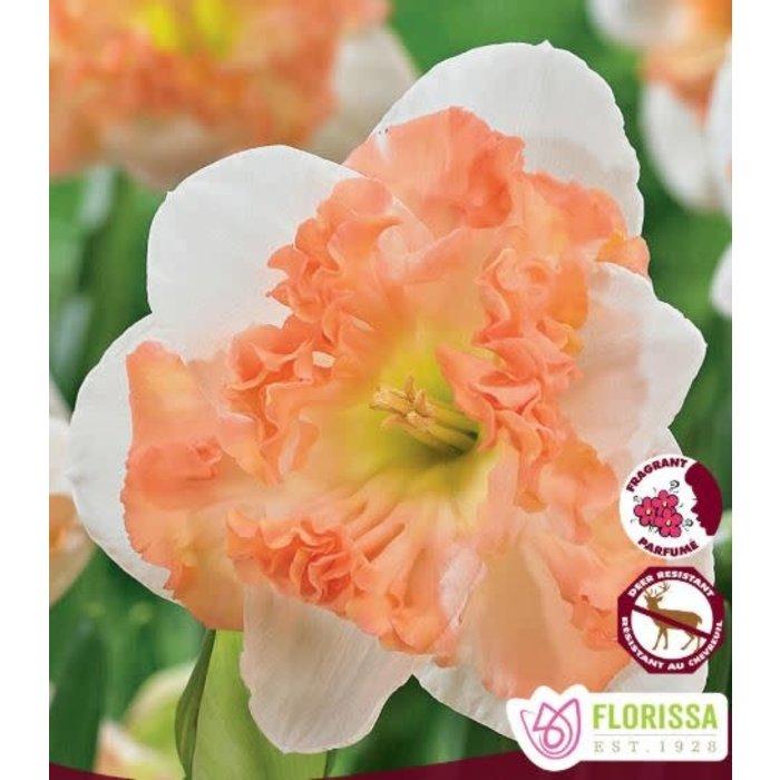 Narcissus Sunny Girlfriend PRE-ORDER