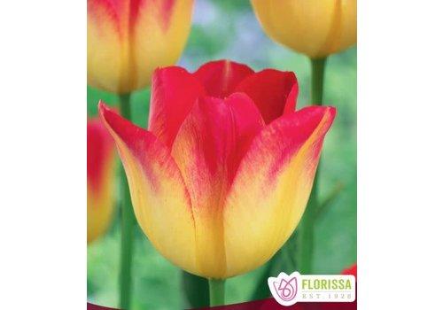 Tulip Suncatcher Package of 6