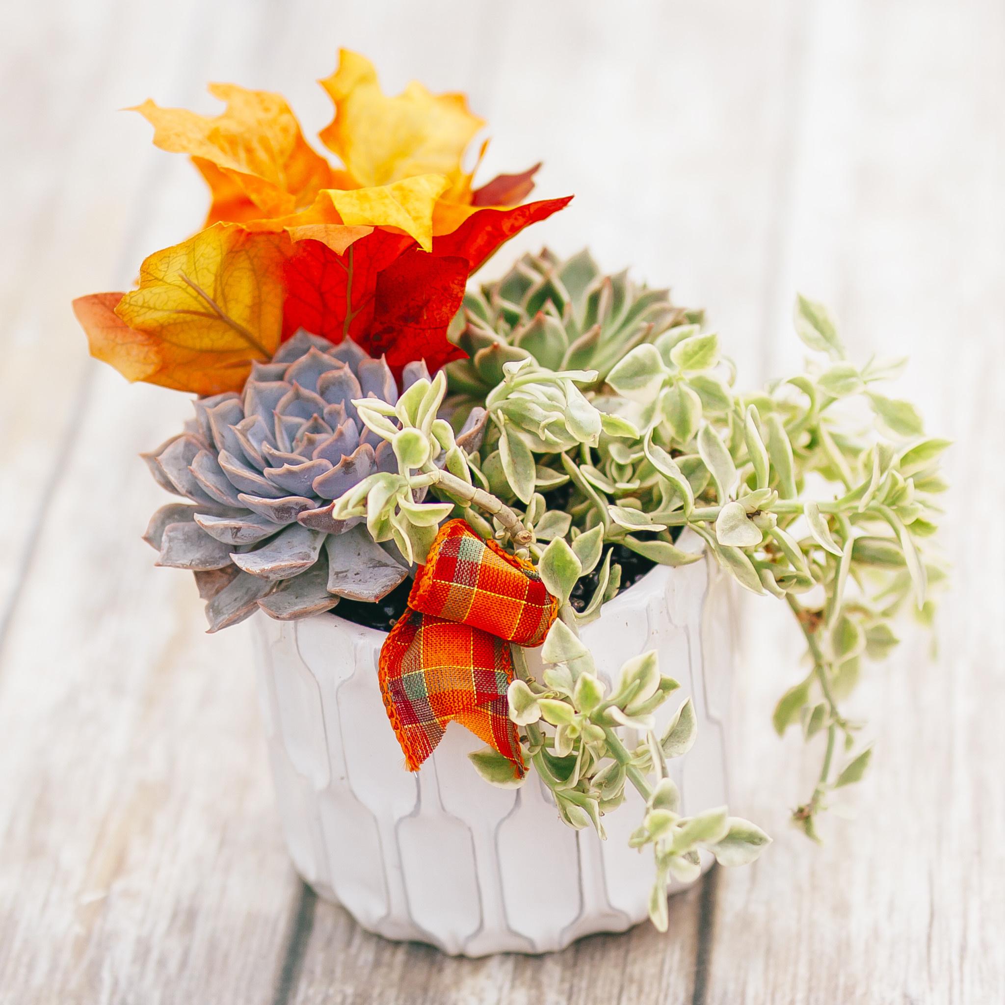 Christmas Succulent Arrangement.Attend A Workshop At Dutch Growers Dutch Growers