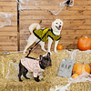 Dogs in the Maze October 20th