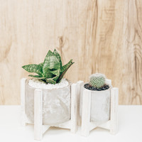 Cement Pot With Wooden Stand