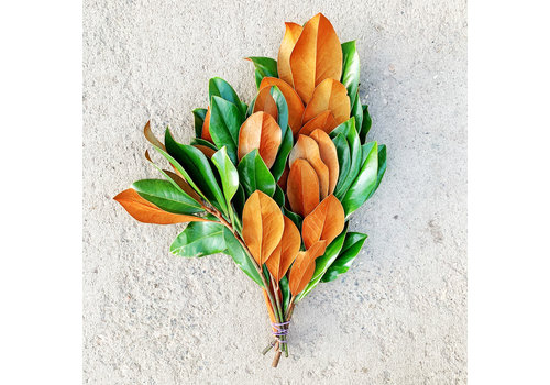 Dutch Growers Magnolia Tips