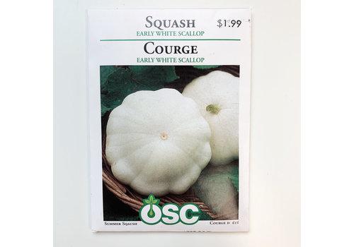 OSC Squash White Bush Scallop Seeds