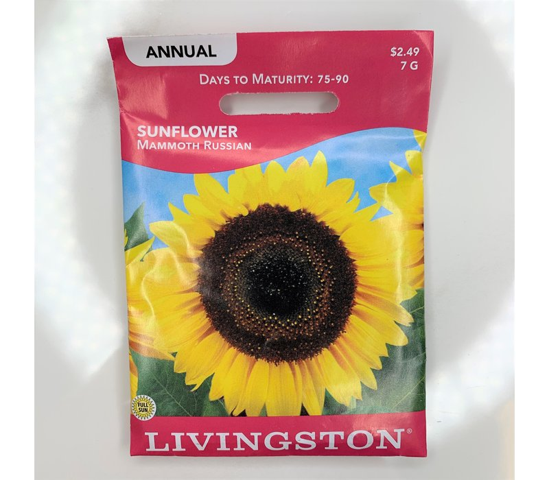 Sunflower Mammoth Russian Seeds