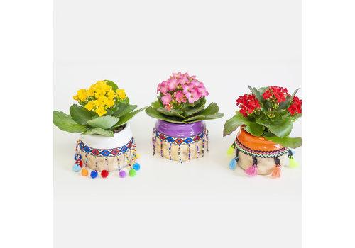 "Kalanchoe With Decorative Pot 2.25"""