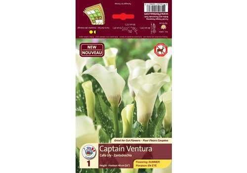 Calla Captain Ventura Bulbs