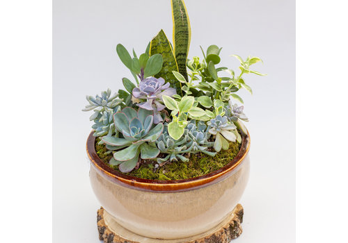 Dutch Growers Cactus and Succulent Garden Combo