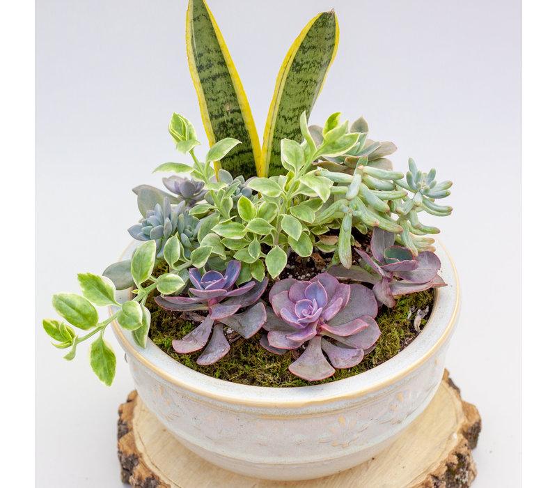 Succulent Garden Combo
