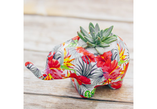 Dutch Growers Elephantastic Potted Succulent
