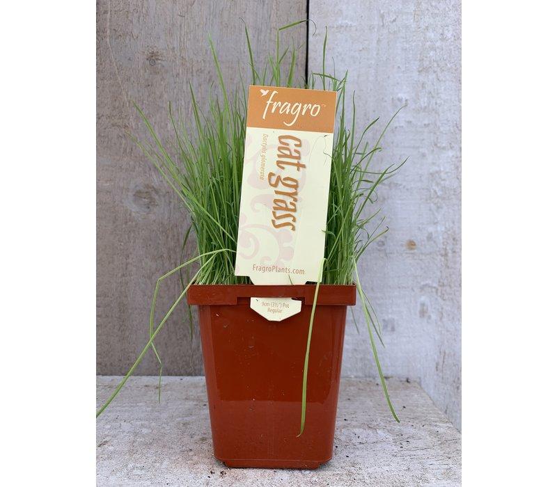 """Cat Grass 3.5"""" Herb"""