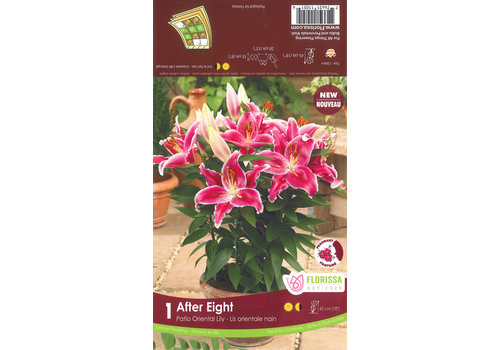 Lily Oriental After Eight Bulbs
