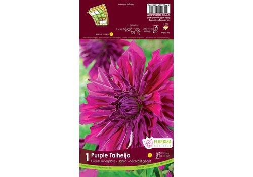 Dahlia Purple Taiheijo Bulbs