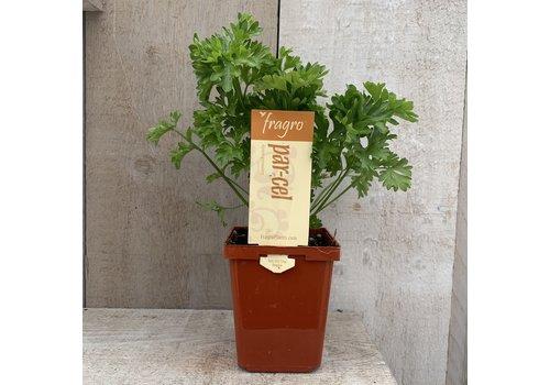 """Fragro Par-Cel 3.5"""" Herb"""