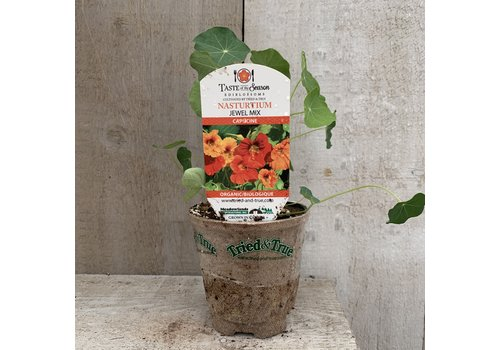 Nasturtium Jewel Mix Edible Flower 4""