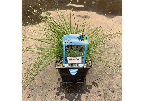 """Fiber Optic Grass 5"""""""