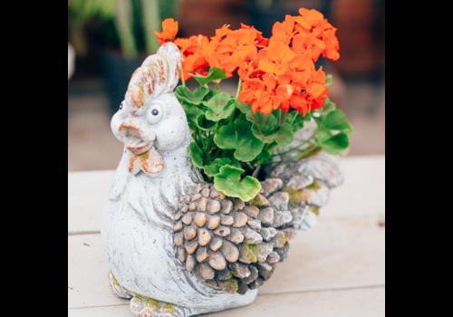 Dutch Growers Chicken Cutie Potted Geranium