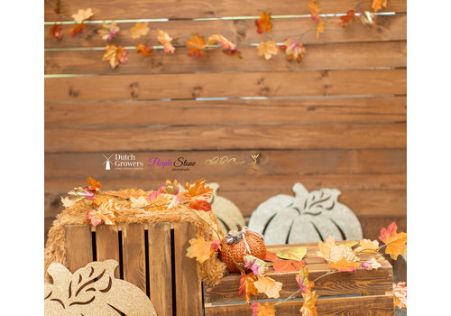 Fall Photo Session Thursday October 15th