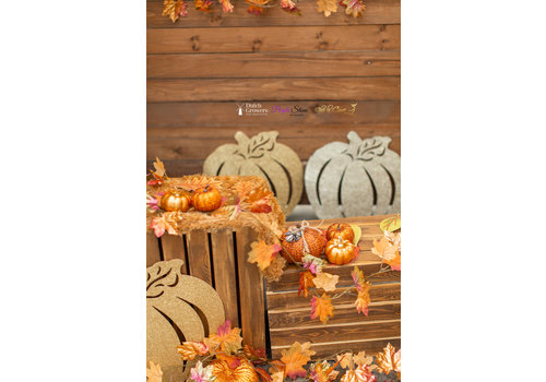 Fall Photo Session Saturday October 17th